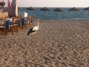 our favorite restaurant and a stork.......